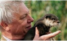 Sir David Attenborough - A Much-Loved Naturalist