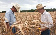 Drought Killed Many Crops In The Mid-West