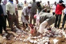 Sharia Brutality
