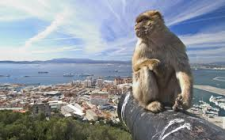 The Apes Of Gibraltar - The Best Thieves On The Peninsular