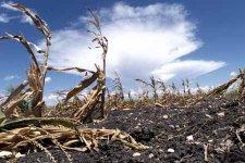 Summer Drought