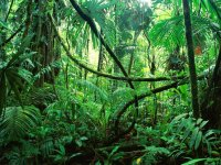Amazon Forest - One Of The Few Surviving Places Of Natural Beauty And Essential To Mankind.