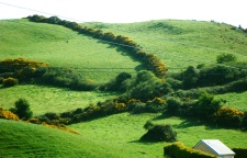 Fields In My Day - Surrounded By Hedgerows