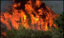 Burning The Rain Forest In Brazil