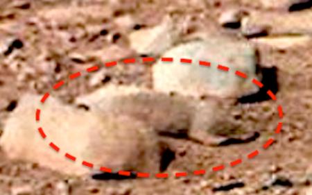 A Mars Rat