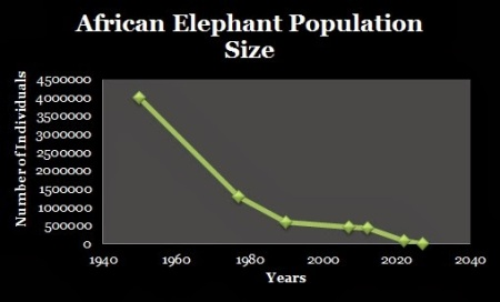 The Decline In The Elephant Population