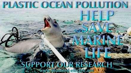 plastic-ocean-polllution-seal-trapped-nets-fishing